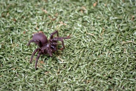 the trap door spider is walking on the grass Reklamní fotografie