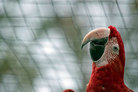 this is a side view of a red and green macaw
