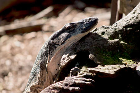 this is a close up of a  lace lizard 写真素材 - 149494625
