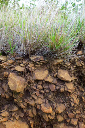 substrate: Soil cross-section showing substrate grass and roots Stock Photo