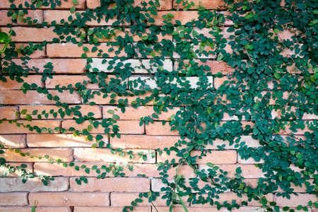 ancient brick wall: Ancient brick wall with weeds