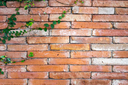 brick texture: Ancient brick wall with weeds