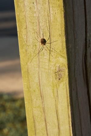 Spin op houten paal in park