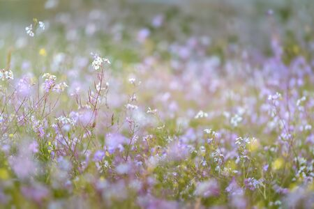 Beautiful field of small flowers