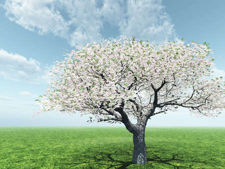 blossoming: Blossoming Stock Photo