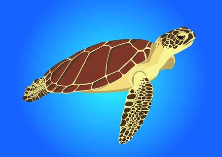 land turtle: sea turtle on blue background