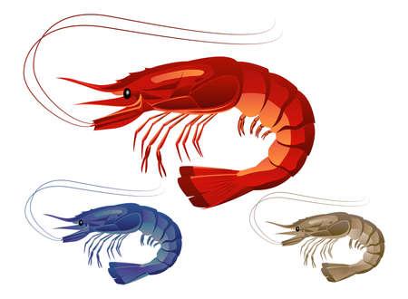 Shrimp on white background photo