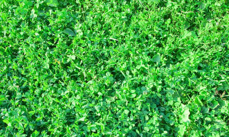 Green grasses Stock Photo - 3267698
