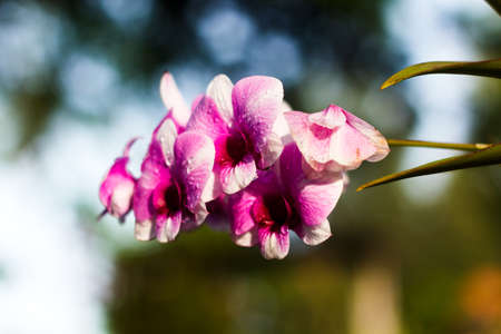Image beautiful orchid in garden photo
