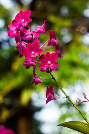 Image beautiful orchid in garden