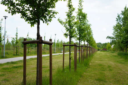 planted: Row of planted trees at a park