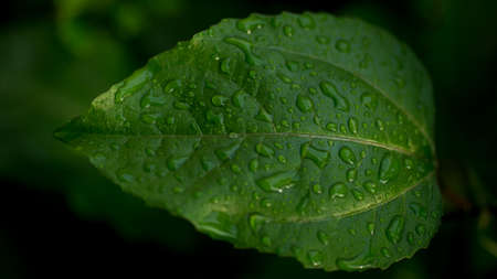 graden: Green leaf with water drop