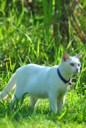 white cat play in the field