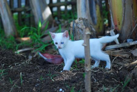 pus: gattino Archivio Fotografico