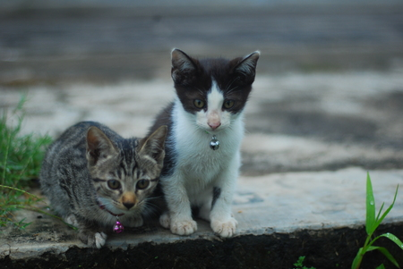 two kittens were waiting for the fish in the moat