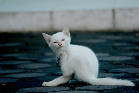 lice: kitten was looking for lice