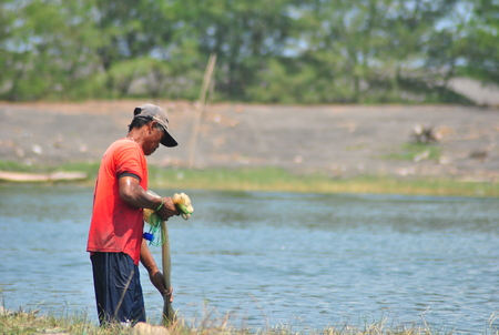 A fisherman is looking for fish with his net on the banks of the river near the glagah beach. Editorial