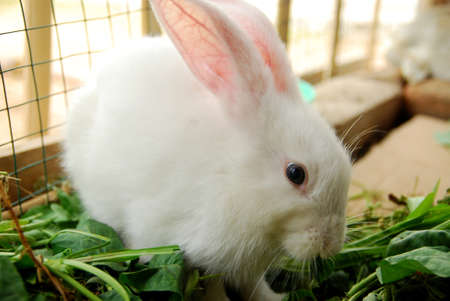 cute white rabbit in the cage