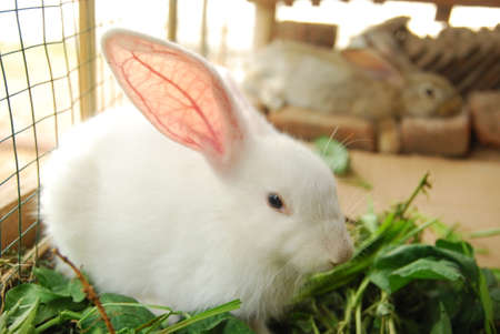 cute rabbit in the cage