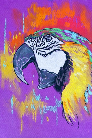 nuances: Original pastel paintings on cardboard  Parrot in