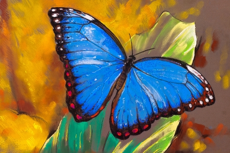 Original pastel paintings on paper. Butterfly. photo
