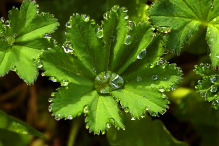 dew drops on green plants in early morning photo