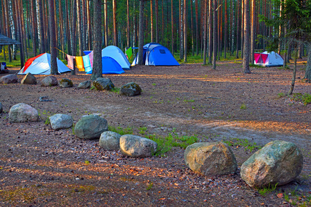 Camping ground in pine forest with blue tents. photo