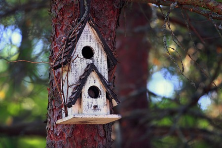 bole: handmade nest box for a bird family on pine bole