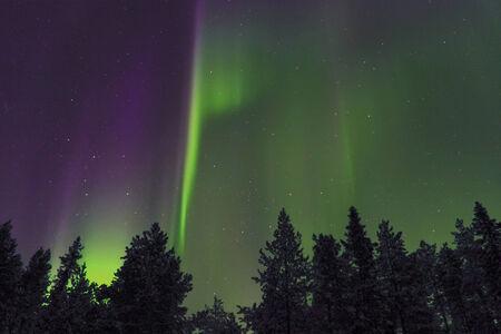 magnetosphere: Northern lights Aurora Borealis sopra la foresta Archivio Fotografico