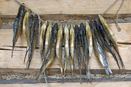 log wall: Salted roach fish hanged on log wall for drying .