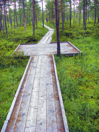Wooden hiking trail leading through the swamp area. (Wheel chair and baby carriage usage possible). Stock Photo