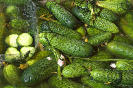 Green fresh pickled cucumbers at the beginning of flavouring process. Imagens