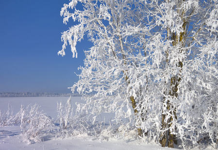 Trees and meadows covered with white frost in cold winter day in Estonia. Archivio Fotografico - 120519005