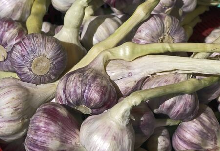 Raw garlic with stems sold at market.