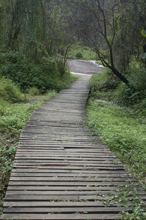 The wooden bridge in forest  photo