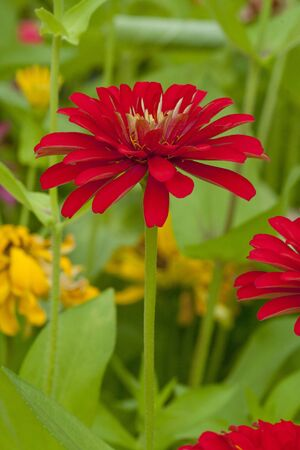 the flower in the garden. photo