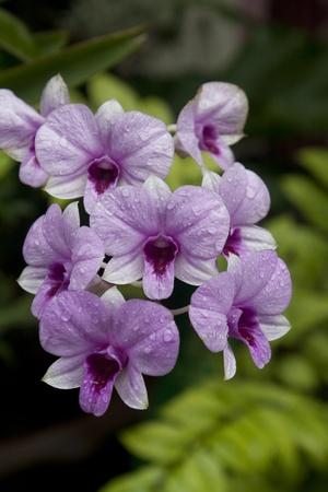 beautiful orchid Stock Photo - 10561831