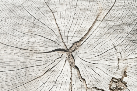Grunge of texture wood materials background photo