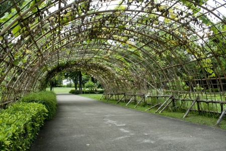Green tunnel made from calabash plant photo
