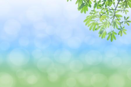 선택적 포커스와 자연 녹색 배경 스톡 콘텐츠 - 20578807