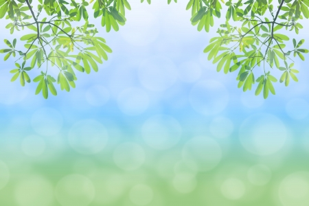 natural green background with selective focus Stock Photo