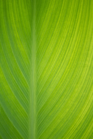 Green leaf abstract background photo