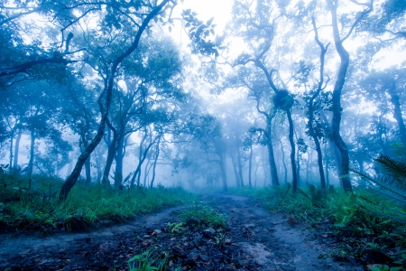 Trails in tropical forests in Thailand during the rainy season  photo