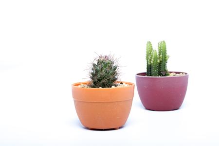 Cactus On White Background Stock Photo