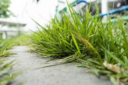 Close up overgrown grass in home