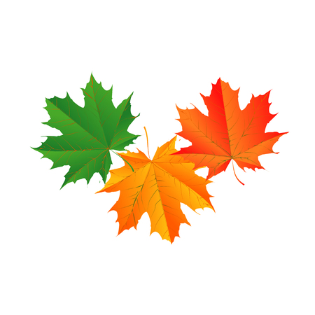 Fall-Leaf Vector