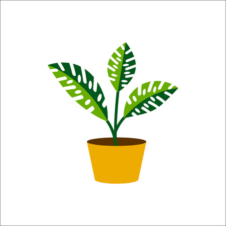 indoor bud: Plant