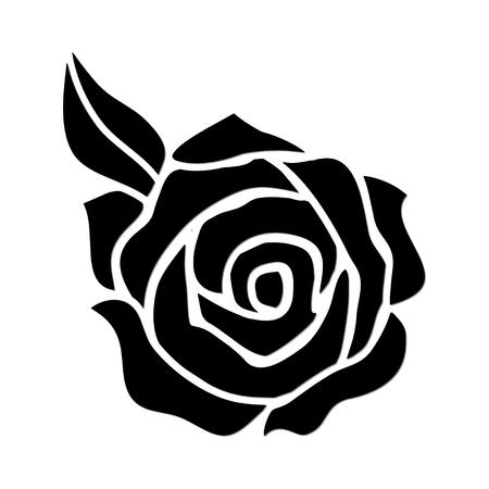 white roses: Rose