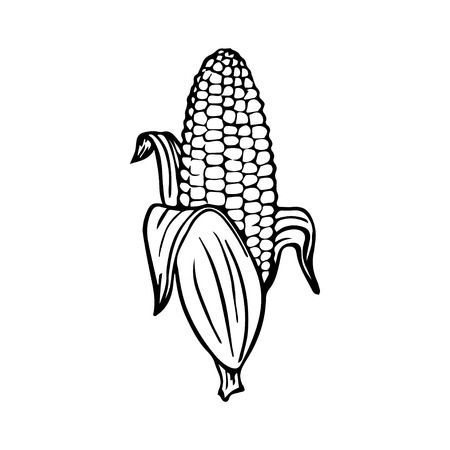 Corn Иллюстрация