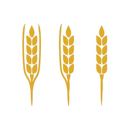 grain fields: Organic Grain (Wheat)